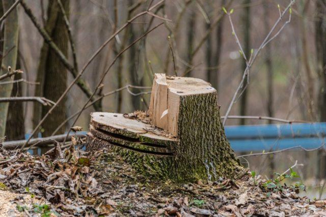 Køb professionelt udstyr til træfældning